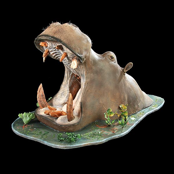 Hippo - First Class Trophy Taxidermy